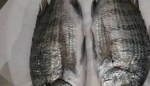 【釣りクラブ】4月7日 賢島